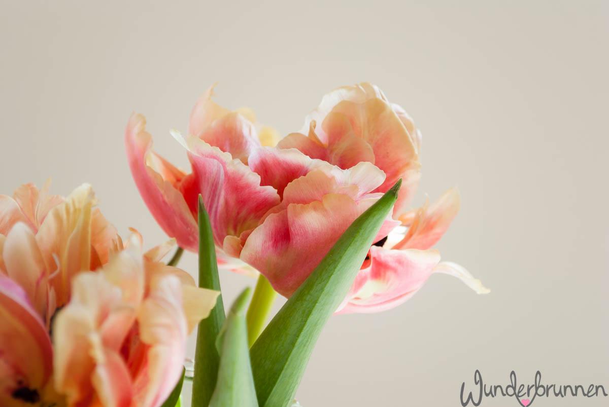 Farbige Tulpen - Wunderbrunnen - Foodblog - Fotografie