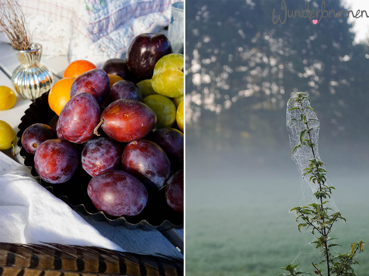 Hallo September! Pflaumen und Septembermorgen - Wunderbrunnen - Foodblog - Fotografie