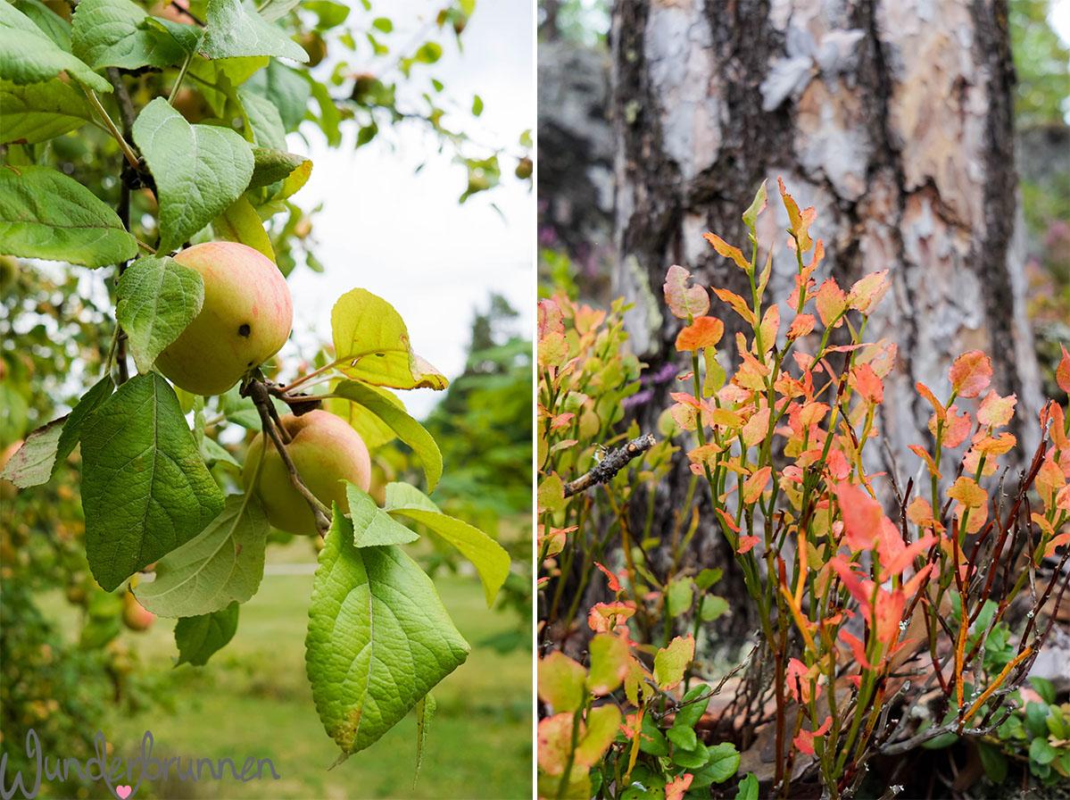Hallo September! Äpfel - Wunderbrunnen - Foodblog - Fotografie