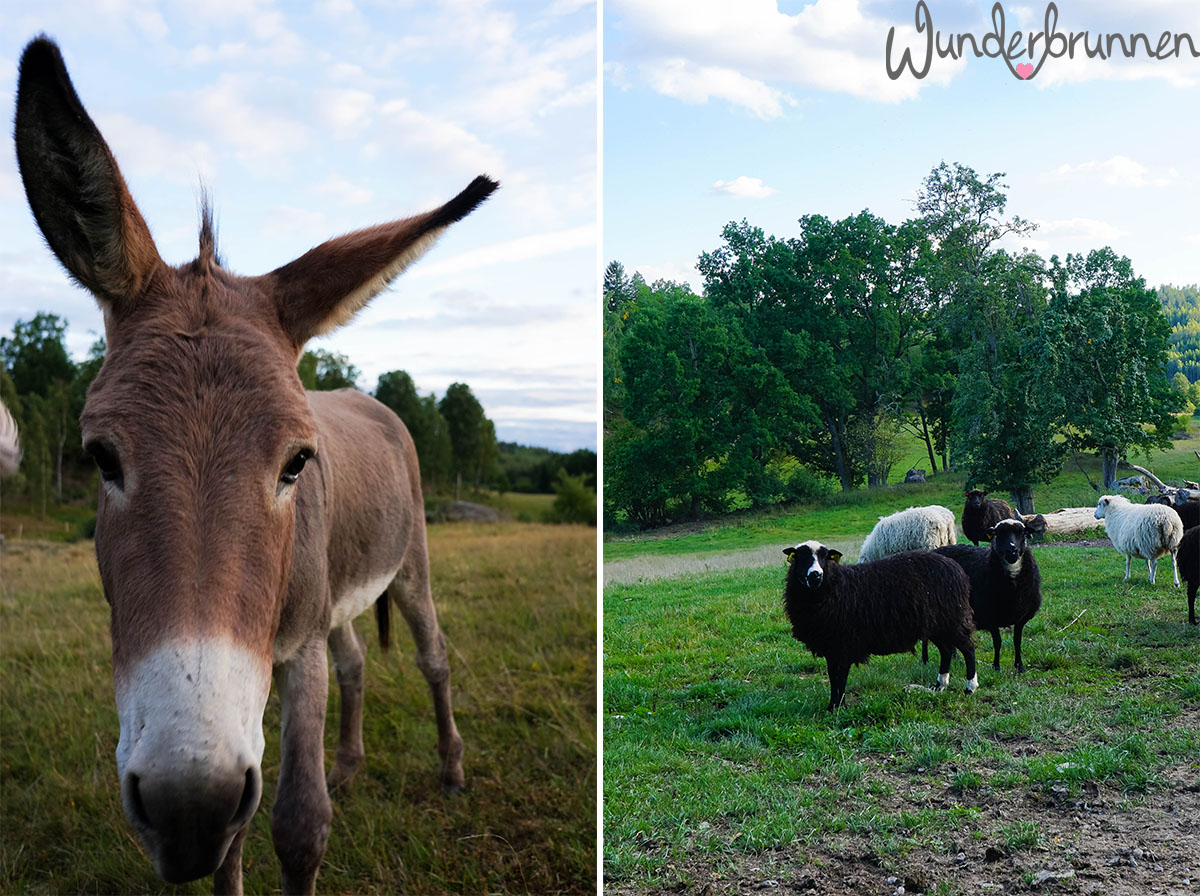 Esel-Liebe - Wunderbrunnen - Foodblog - Fotografie