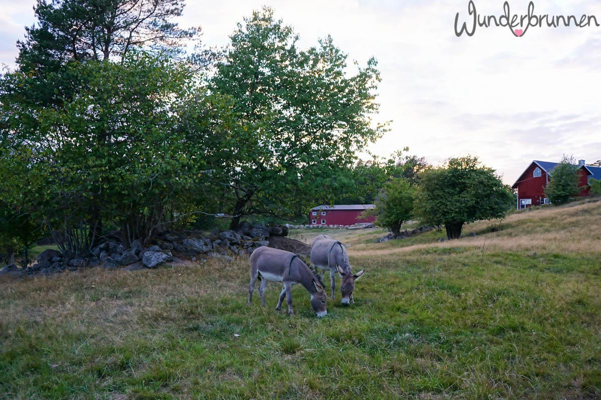 Schweden - Wunderbrunnen - Foodblog - Fotografie