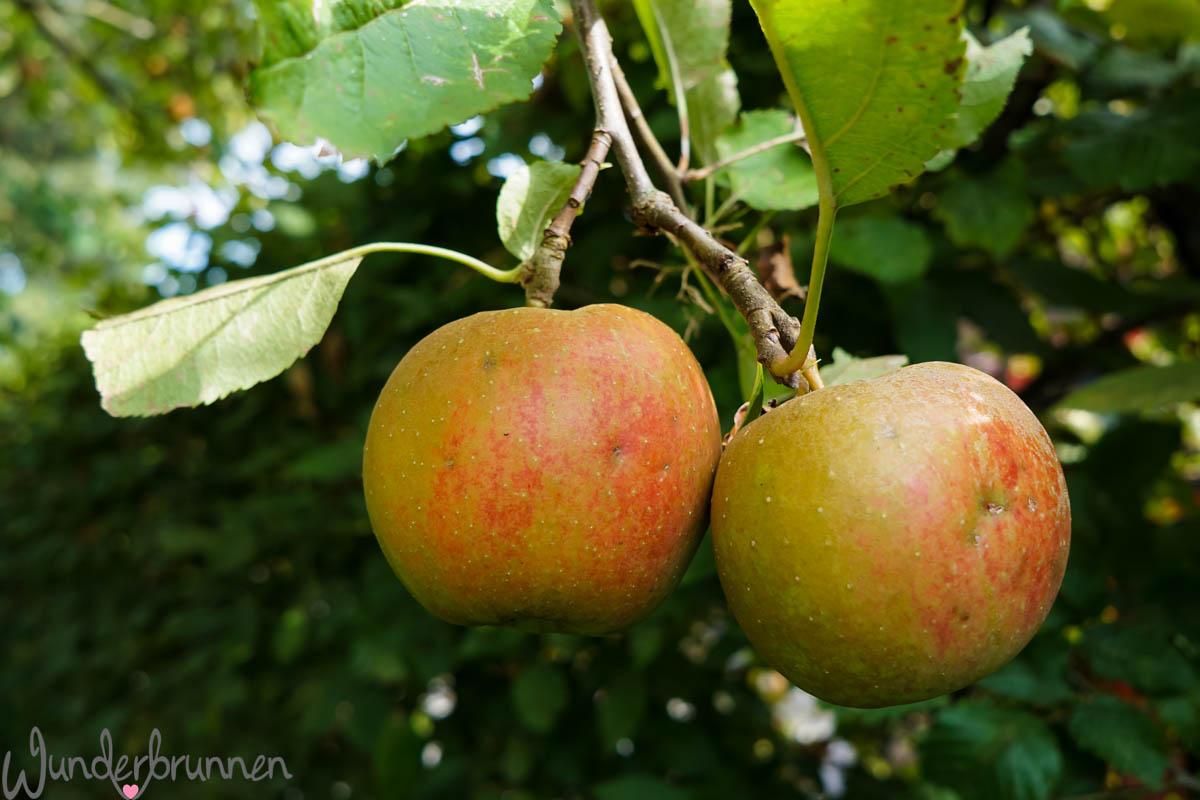 Apfel am Baum - Wunderbrunnen - Foodblog - Fotografie