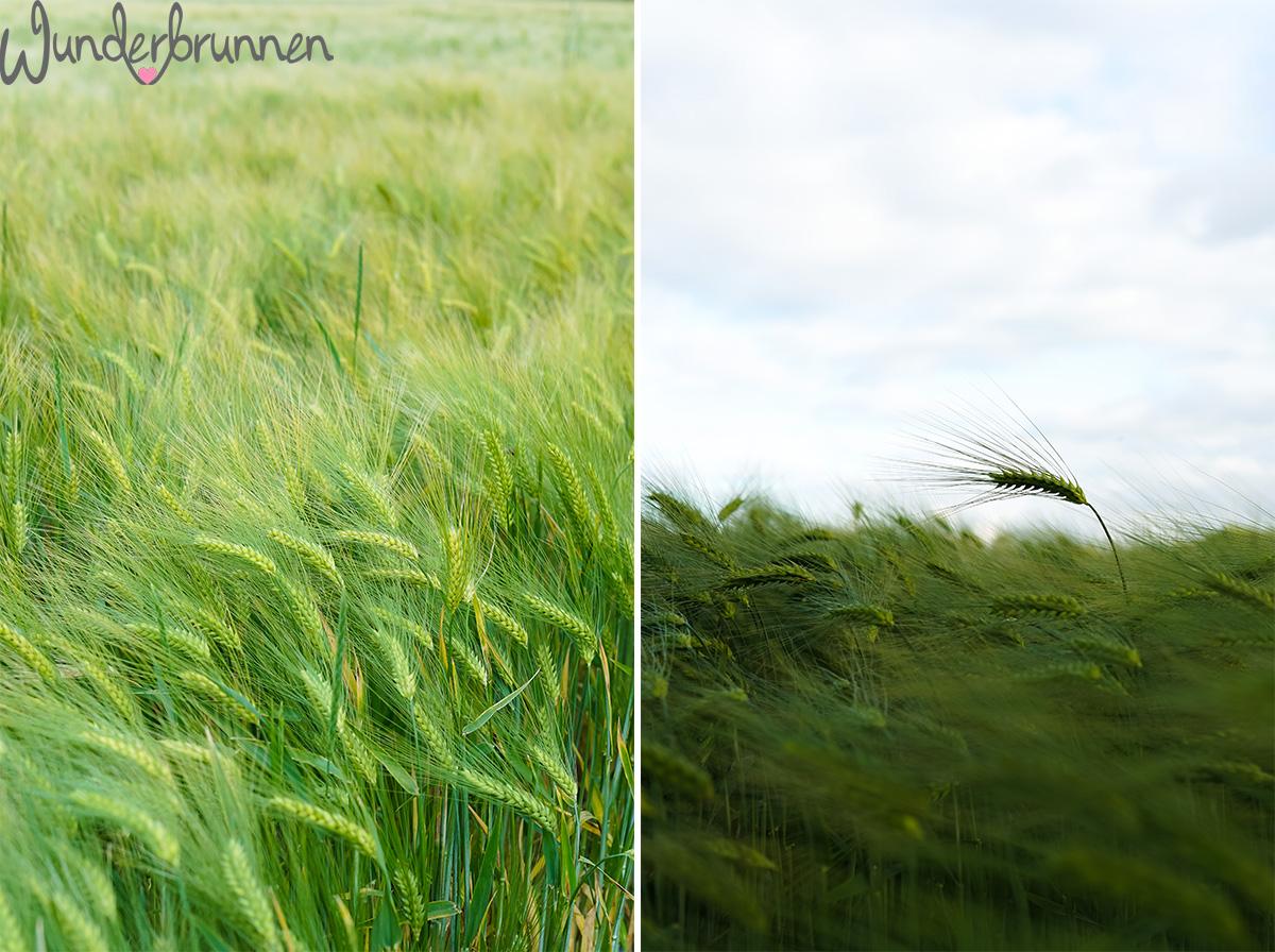 Hallo Juli und Gerstenfelder - Wunderbrunnen - Foodblog - Fotografie