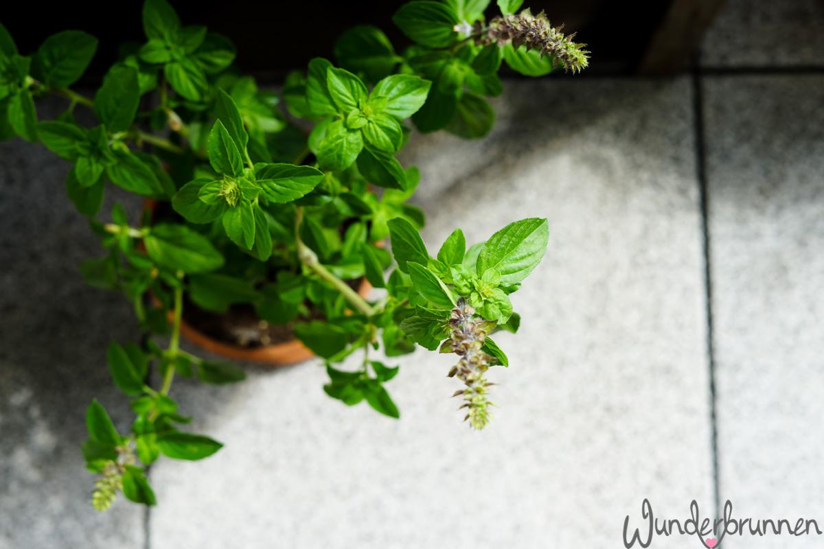 Pesto Trapanese - Das ultimative Pestoding - Wunderbrunnen - Foodblog - Fotografie