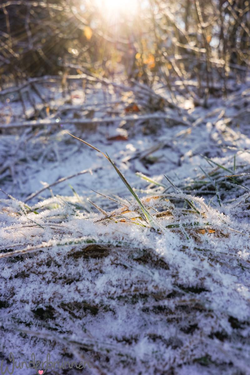 Hallo Dezember - Wunderbrunnen - Foodblog - Fotografie