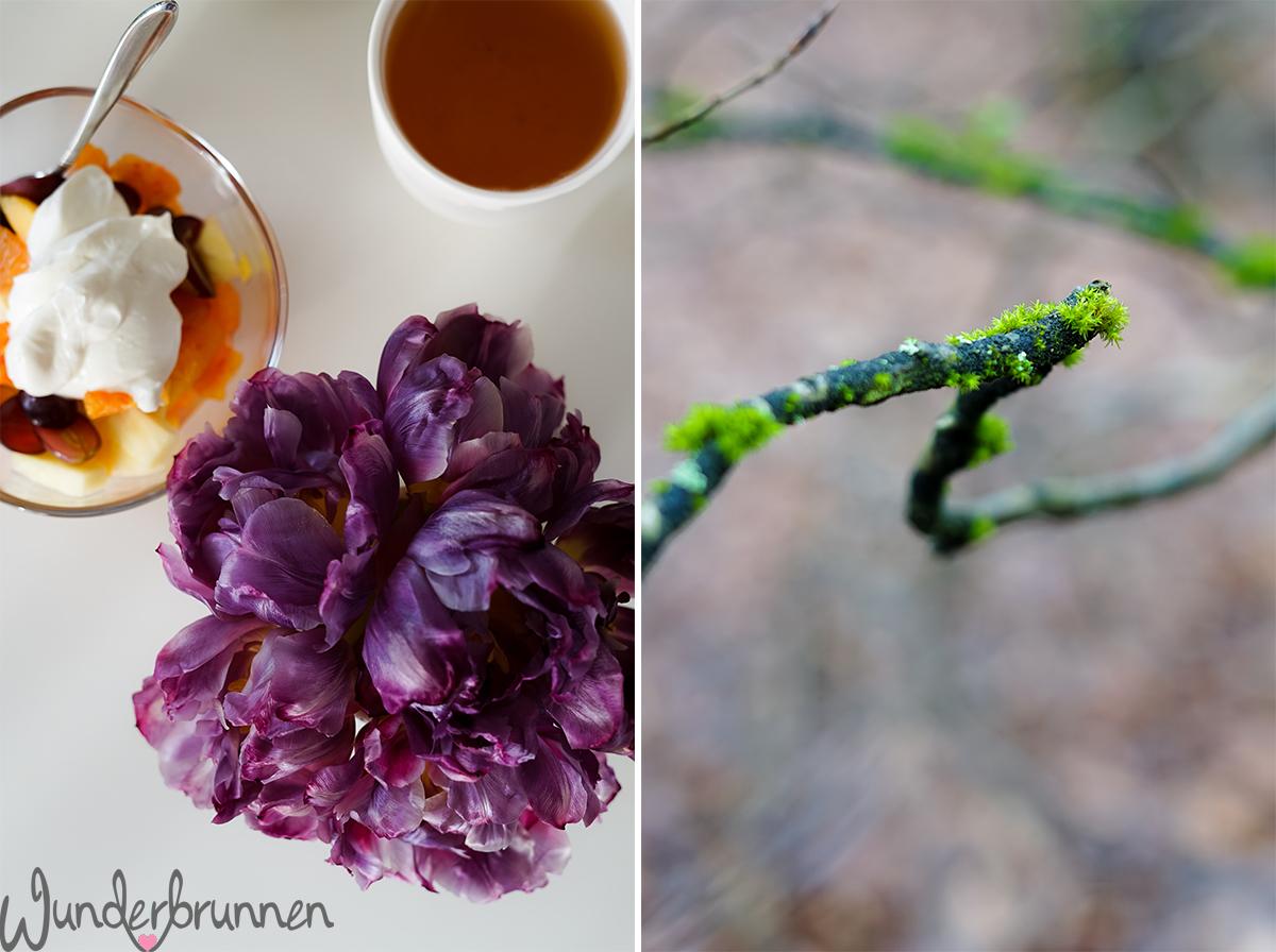 Neues im Februar - Wunderbrunnen - Foodblog - Fotografie
