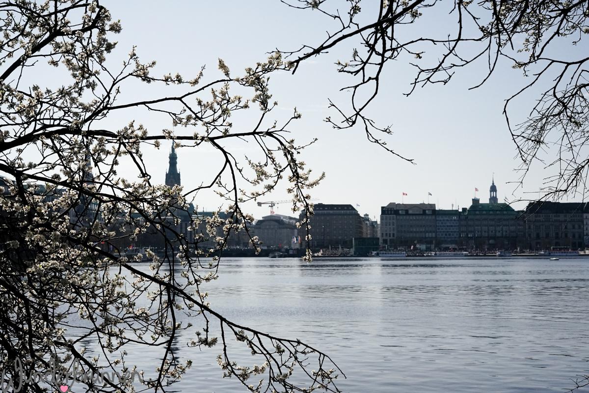 Ein Spaziergang um die Außenalster in Hamburg - - Wunderbrunnen - Foodblog - Fotografie