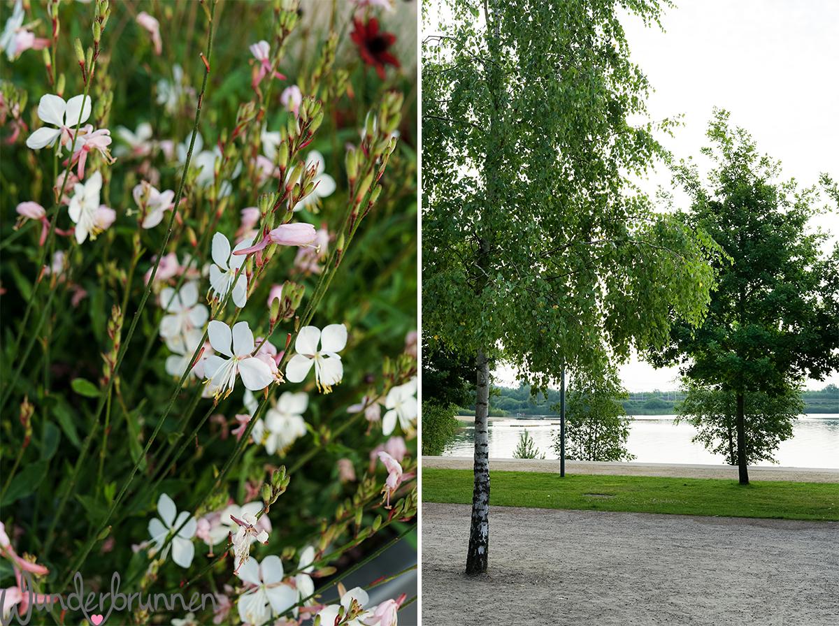 Hallo August! + Blumenliebe im Stadtpark Norderstedt - Wunderbrunnen - Foodblog - Fotografie