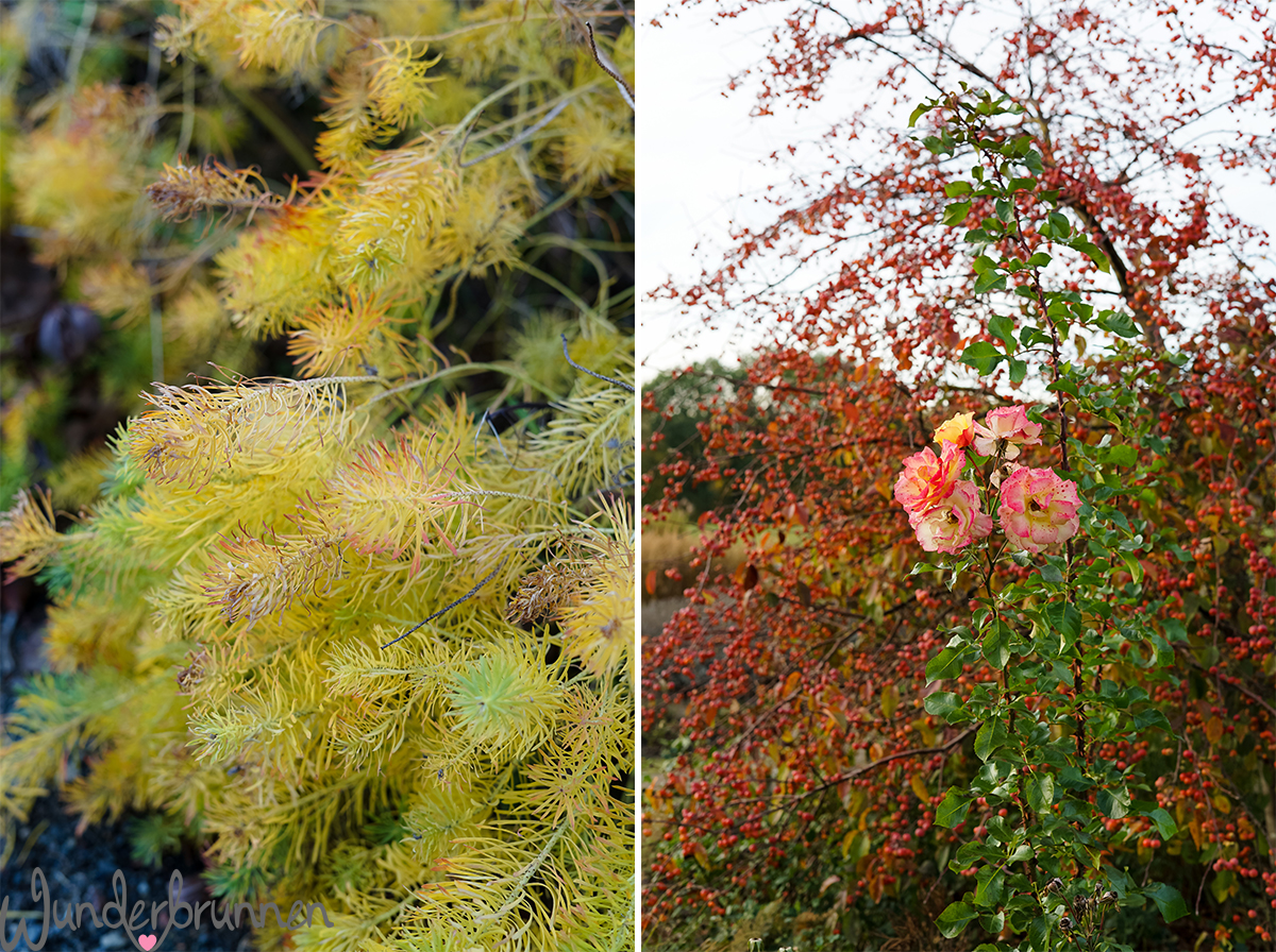 Hallo November und November-Challenges - Wunderbrunnen - Foodblog - Fotografie