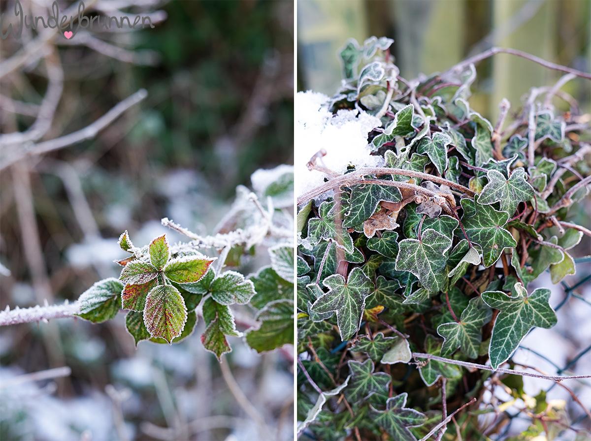 Grünkohl-Pesto für Saisonal schmeckt's besser - Wunderbrunnen - Foodblog - Fotografie
