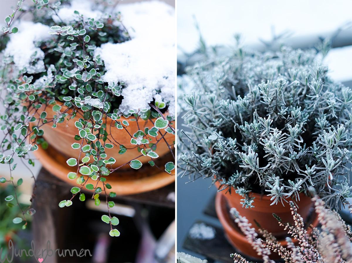Hallo Februar! So schön ist der Winter drinnen und draußen -  Wunderbrunnen - Foodblog - Fotografie